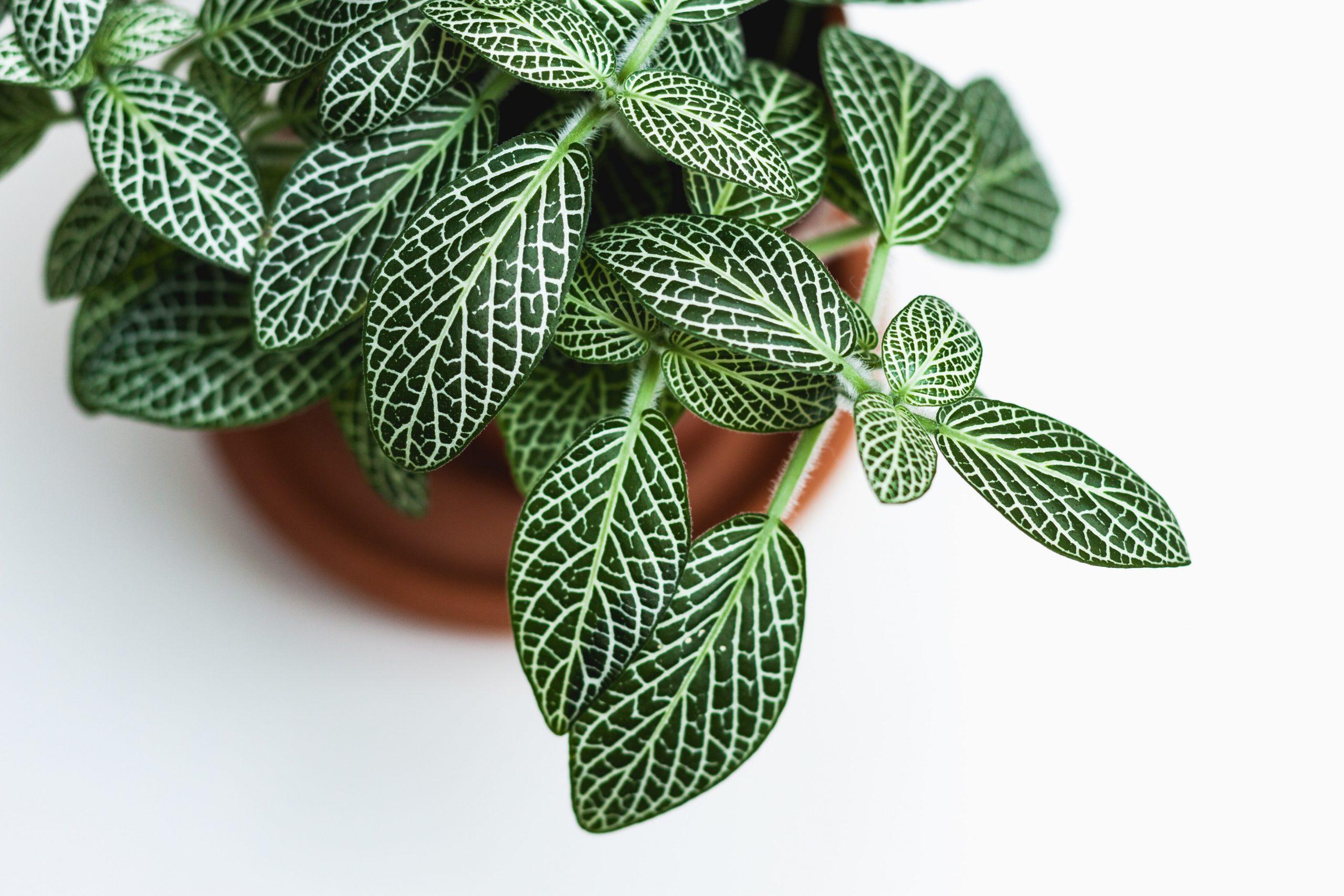 Entretien de plantes, une spécialité de Planteca