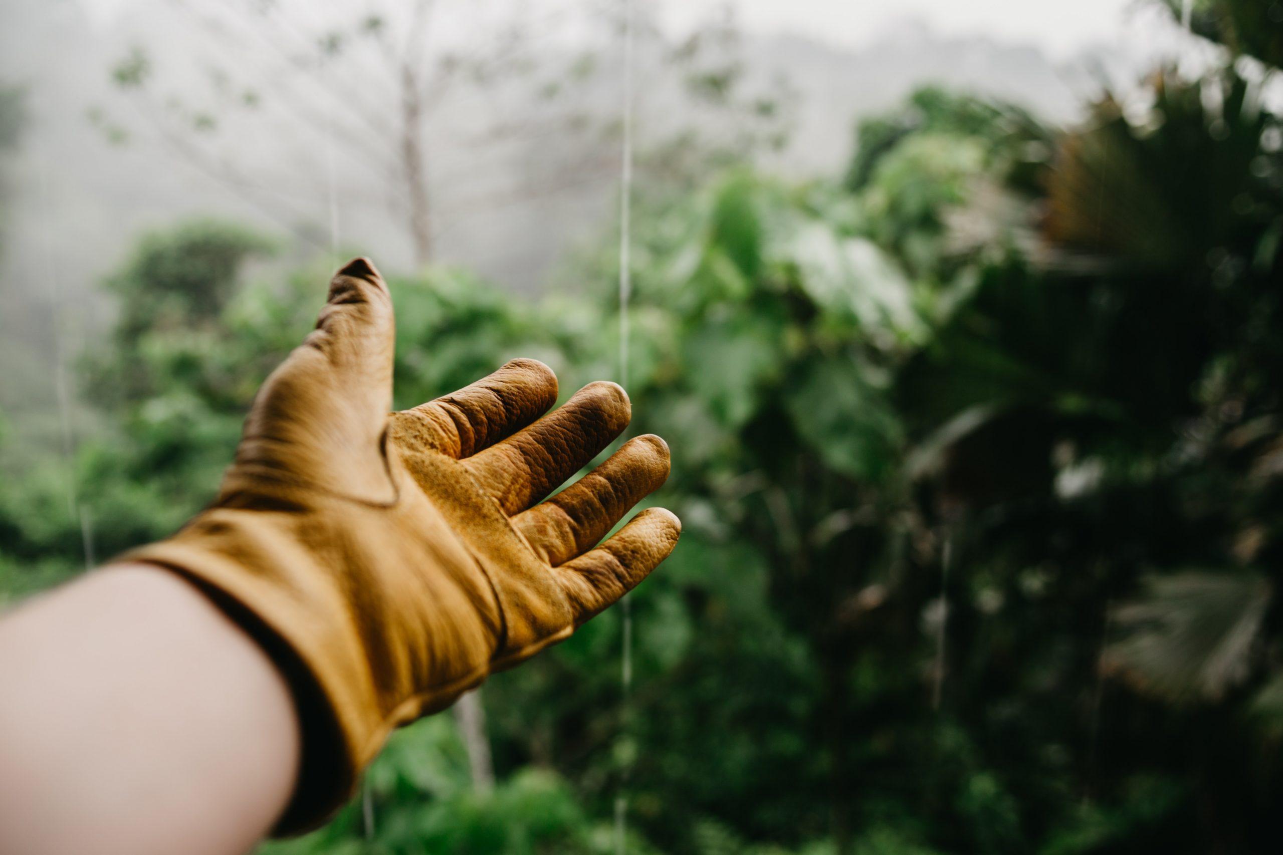Services d'entretien d'aménagement végétal de Planteca