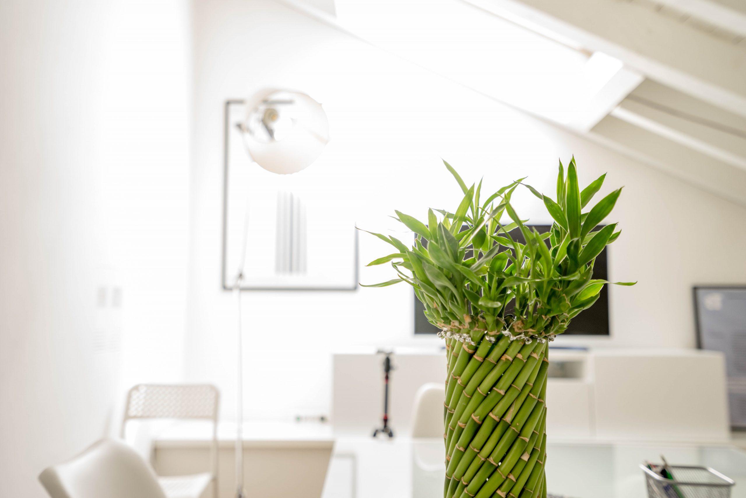 Plantes au bureau: un arrangement de bambou