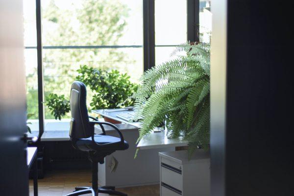 Des plantes au bureau, un aménagement végétal qui fait du bien