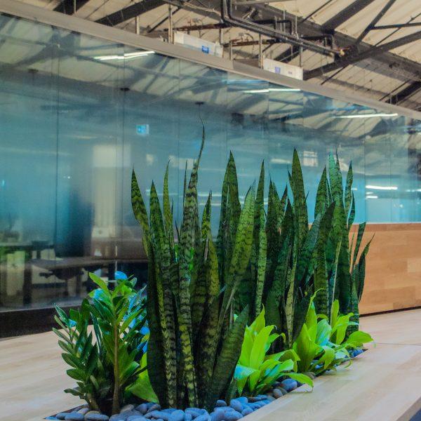 Aménagement de plantes au Nordelec