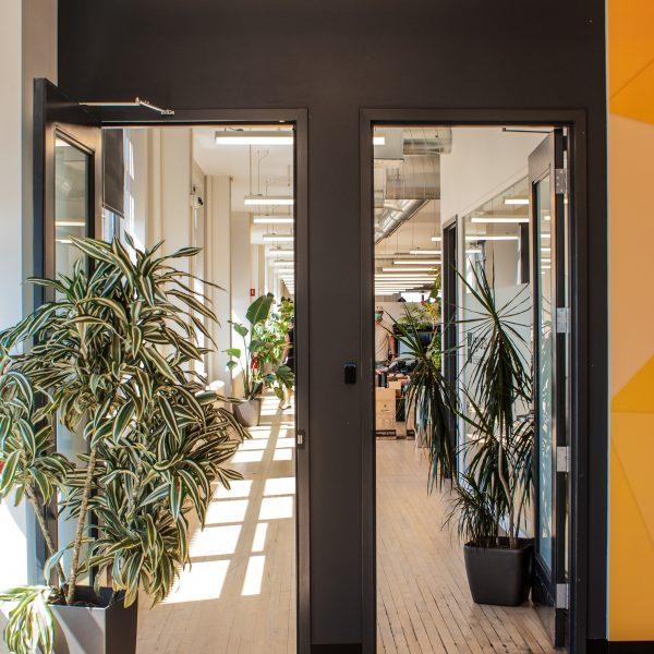 Plantes de sol dans un bureau