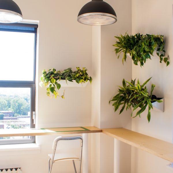 Aménagement de plantes au mur