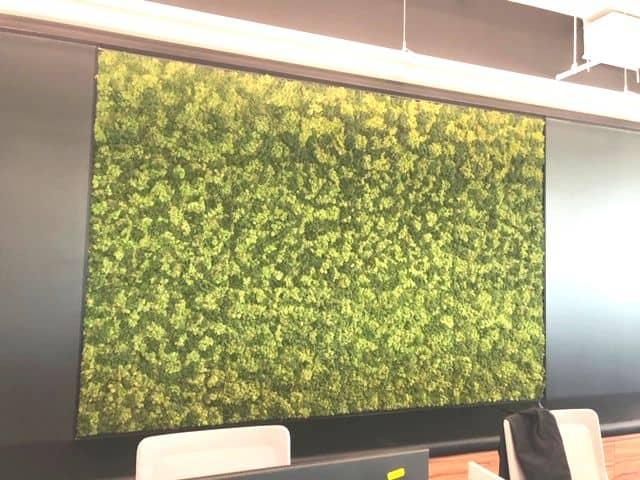 Un mur vert réalisé par Planteca pour des bureaux gouvernementaux à Montréal.