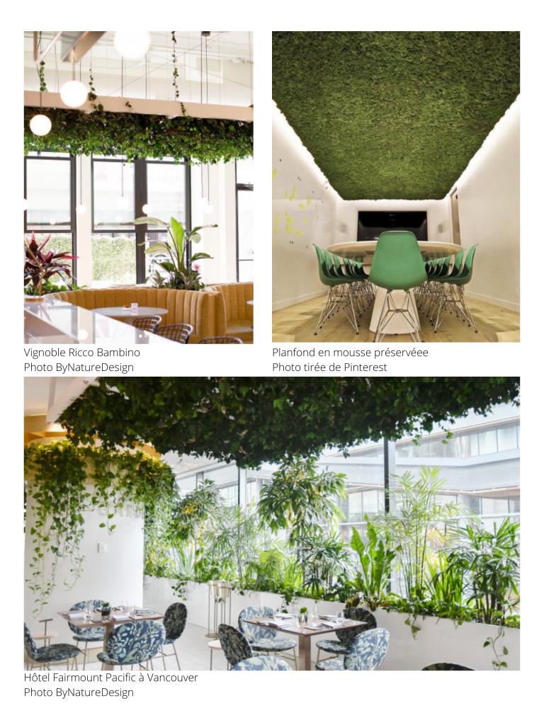 Des exemples d'aménagements de plantes en hauteur.