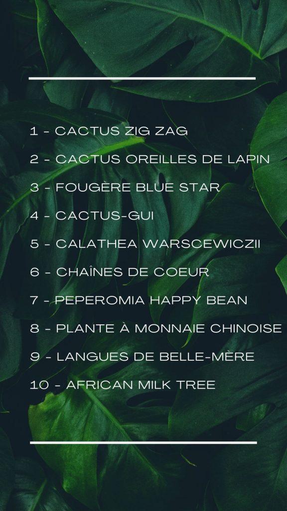 Top 10 des plantes d'intérieur en 2021.