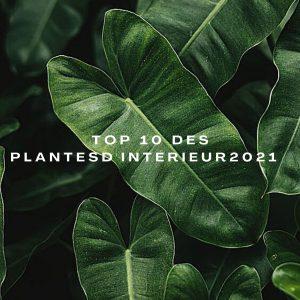 top 10 - plantes d'intérieur 2021